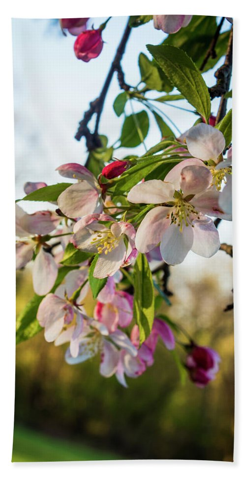 Cherry Blossoms Hand Towel featuring the photograph New Life by Denise Harty