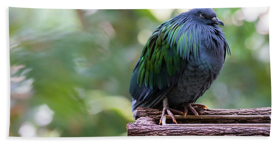 Nicobar Pigeon Hand Towel featuring the photograph Nicobar Pigeon by Andrew Lelea