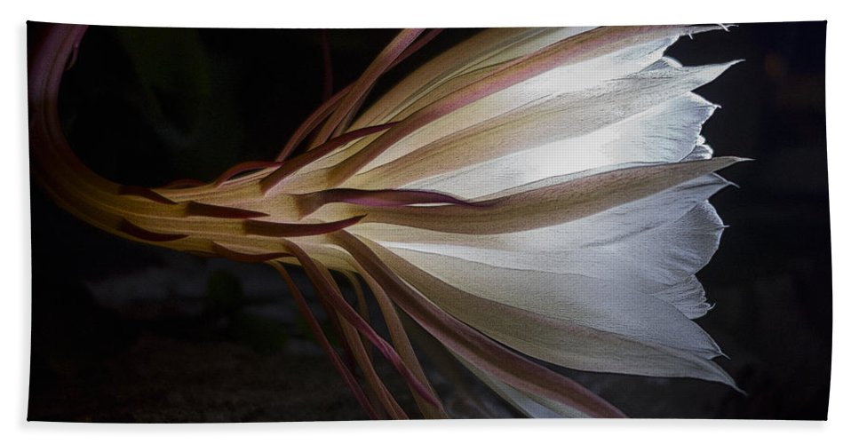 Cereus Bath Sheet featuring the photograph Night Blooming Cereus by David Stone