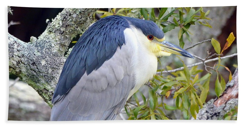 Black-crowned Night Heron Bath Sheet featuring the photograph Night Heron by Carla Parris