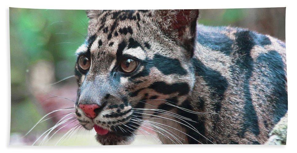 Leopard Bath Sheet featuring the photograph Niran by Gina Fitzhugh