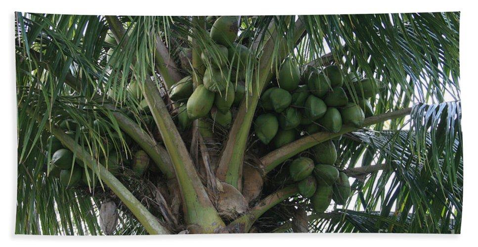 Aloha Hand Towel featuring the photograph Niu Ola Hiki Coconut Palm by Sharon Mau