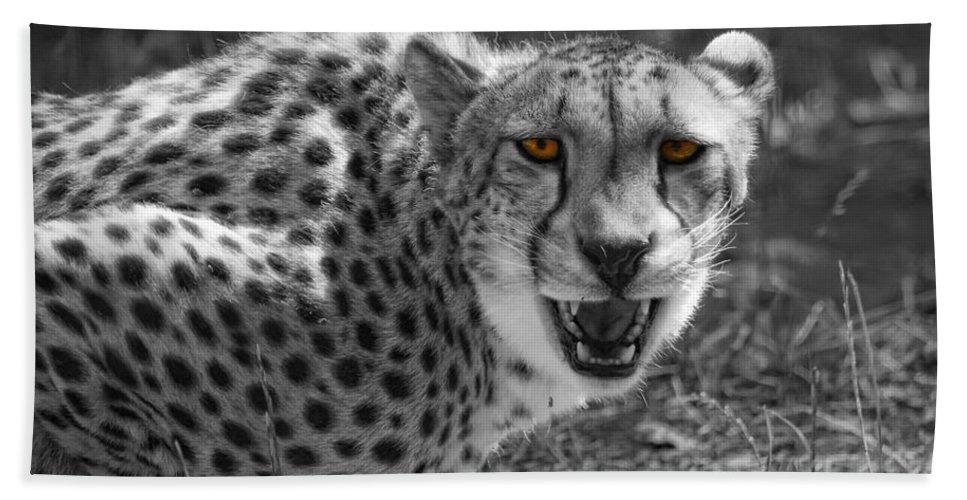 Cheetah Bath Sheet featuring the photograph No Argument by Donna Blackhall