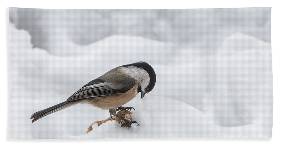 Chickadee Hand Towel featuring the photograph Chickadee Finds A Peanut by Patti Deters