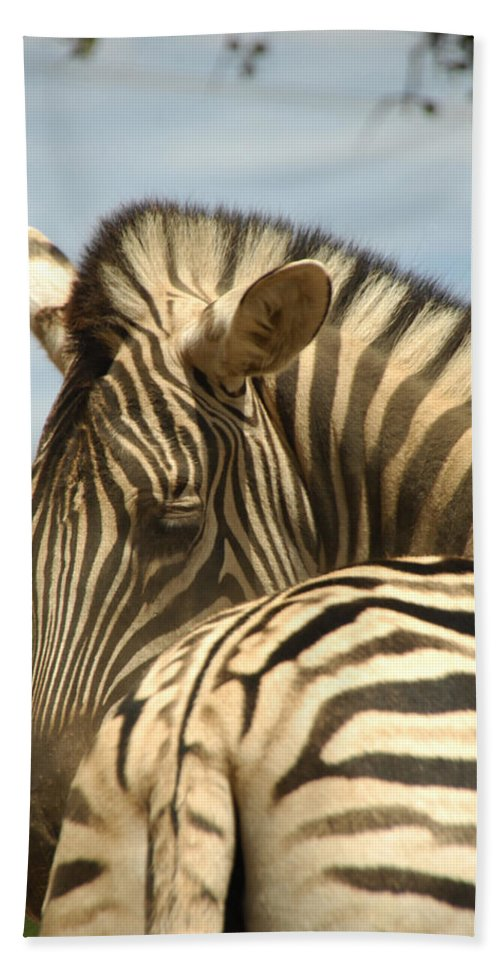 Zebra Bath Sheet featuring the photograph No Tailgaiting by Donna Blackhall