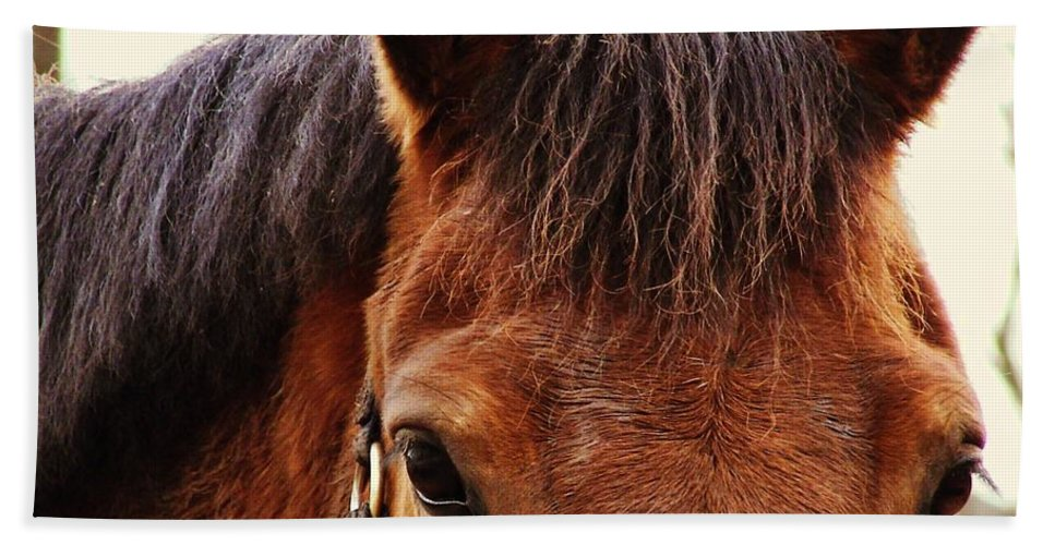 Horse Bath Sheet featuring the photograph Noble Companion by JAMART Photography