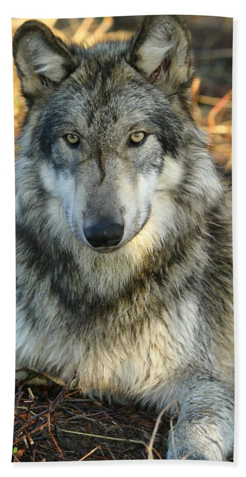 Wolf Lupine Canis Lupus Animal Wildlife Photography Photograph Bath Sheet featuring the photograph Noble Lupine by Shari Jardina