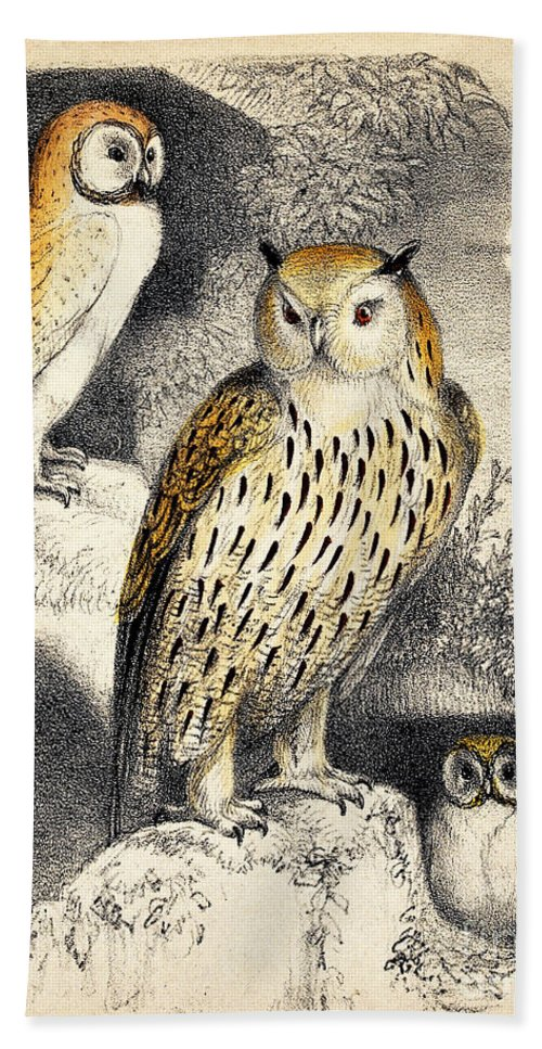 Historic Hand Towel featuring the photograph Nocturnal Scene With Three Owls by Wellcome Images