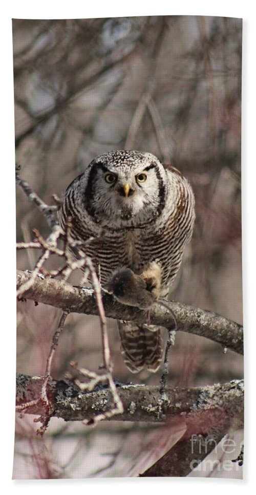 Northern Hawk Owl Hand Towel featuring the photograph Northern Hawk Owl Having Lunch 9417 by Joseph Marquis