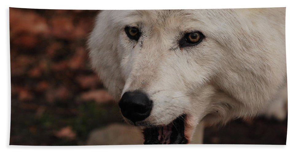 Wolf Hand Towel featuring the photograph Not A Happy Face by Lori Tambakis