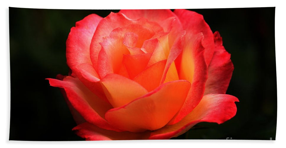 Floral Bath Sheet featuring the photograph Not A Second Hand Rose by James Eddy