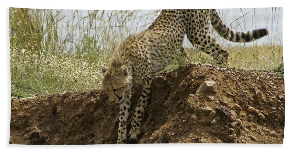 Africa Hand Towel featuring the photograph Not As Easy As It Looks by Michele Burgess