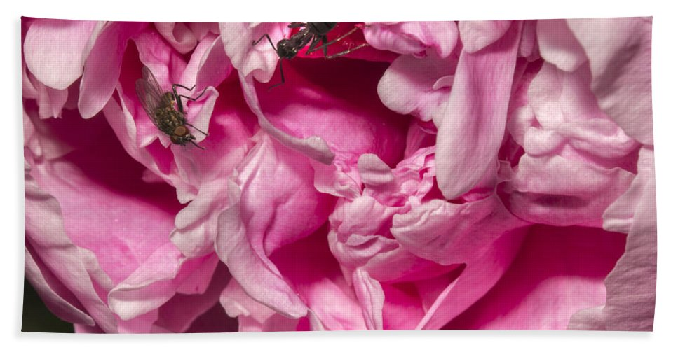Peony Hand Towel featuring the photograph Not On My Watch by Robert Storost
