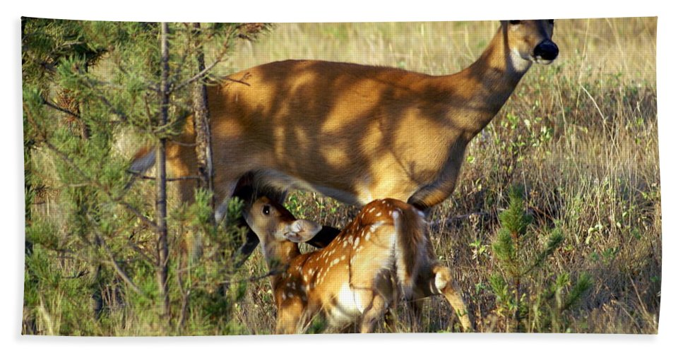 Deer Bath Towel featuring the photograph Nursing Fawn by Marty Koch