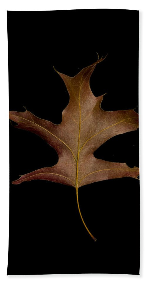 Autumn Hand Towel featuring the photograph Oak Leaf by David Stone