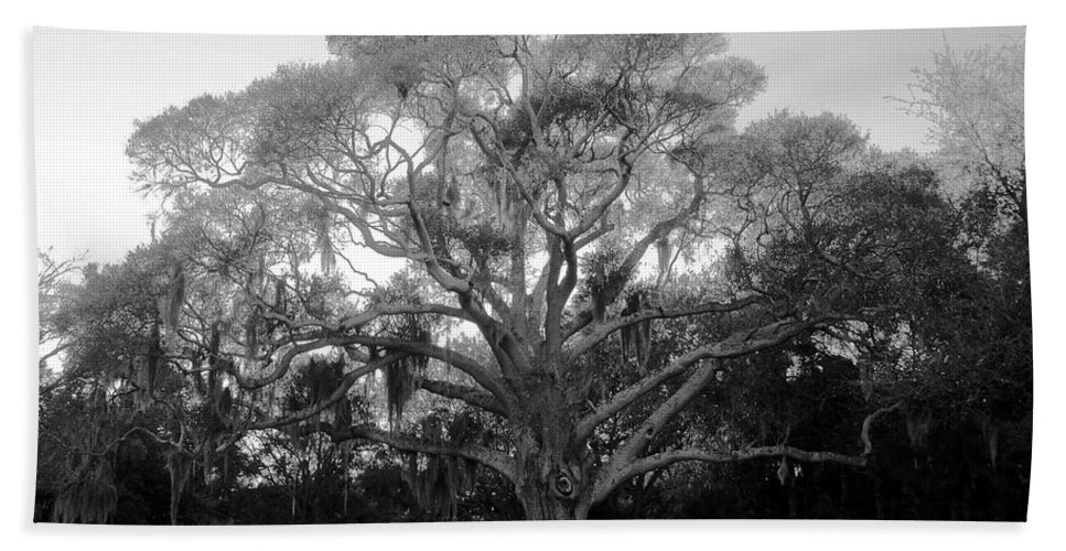 Oak Tree Bath Towel featuring the photograph Oak Tree by David Lee Thompson