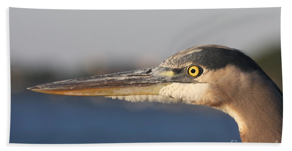 Heron Bath Sheet featuring the photograph Observant Eye - Heron Portrait by Christiane Schulze Art And Photography