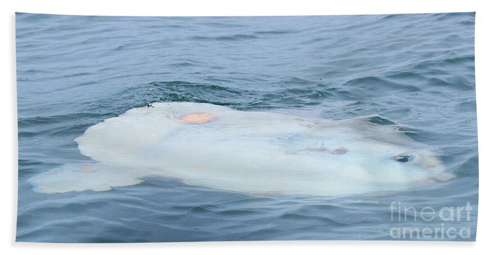 Sunfish Hand Towel featuring the photograph Ocean Sunfish by Kris Hiemstra