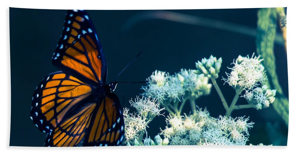 Butterfly Hand Towel featuring the photograph Offer Of Forgivness by Kristin Hunt