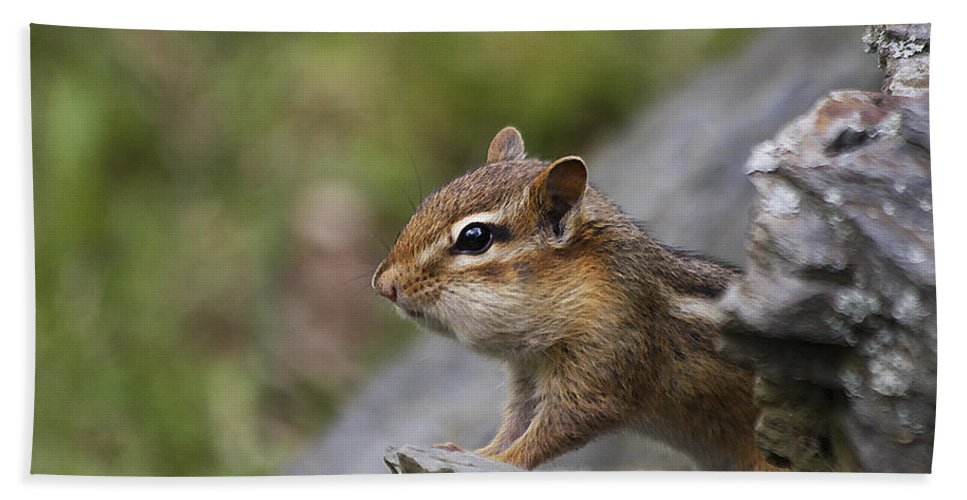 Chipmunk Hand Towel featuring the photograph Ok So My Cheeks Are Full by Deborah Benoit