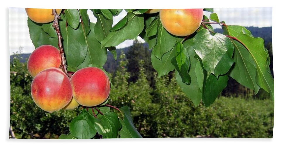 Apricots Hand Towel featuring the digital art Okanagan Apricots by Will Borden