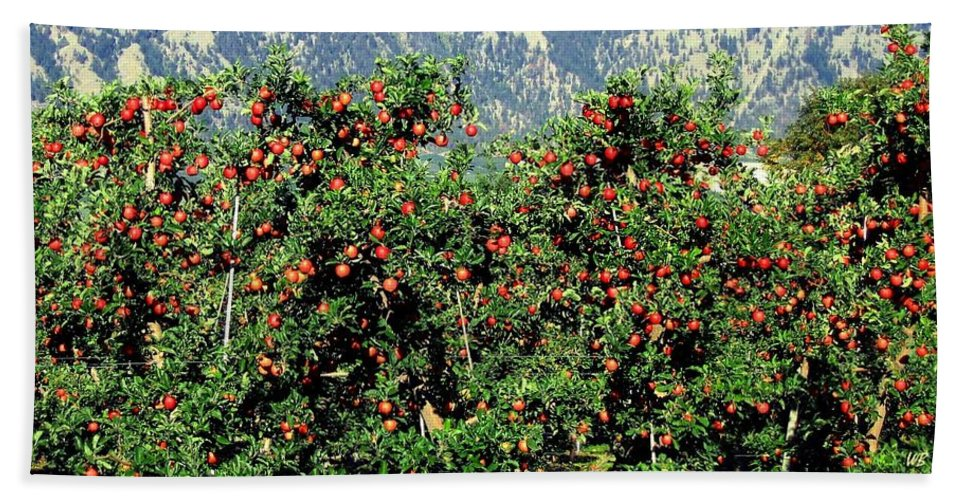 Apples Bath Sheet featuring the photograph Okanagan Valley Apples by Will Borden