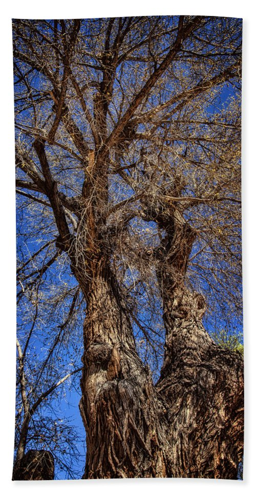 Photography Hand Towel featuring the photograph Old Cottonwood by Diana Powell