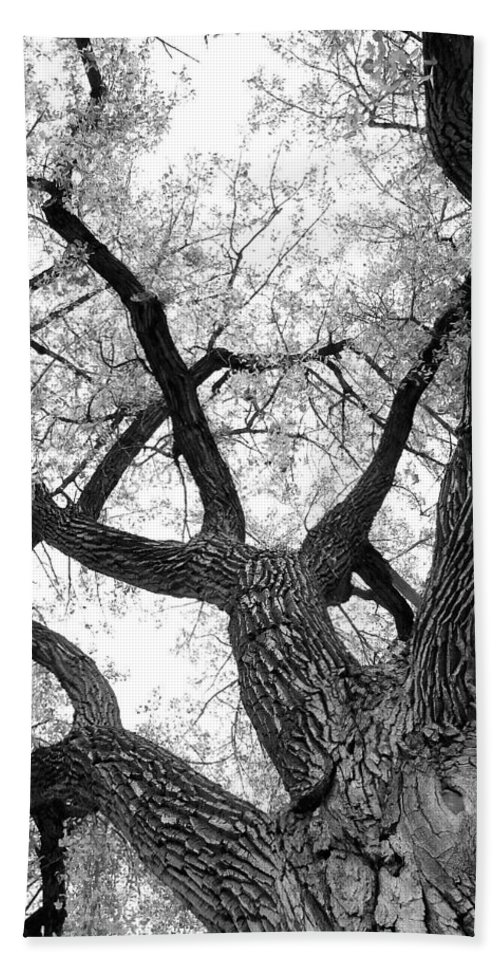 Cottonwood Hand Towel featuring the photograph Old Cottonwood Tree by James BO Insogna