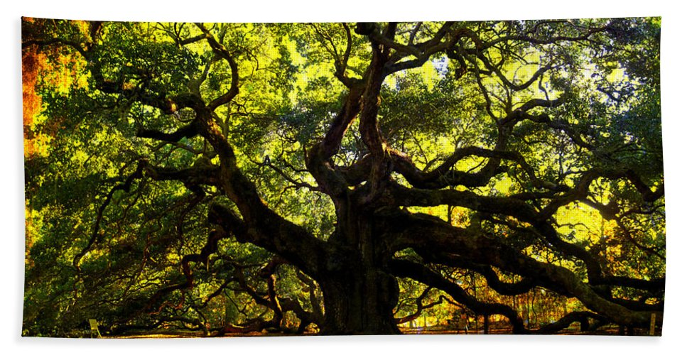 Angel Oak Hand Towel featuring the photograph Old Old Angel Oak In Charleston by Susanne Van Hulst
