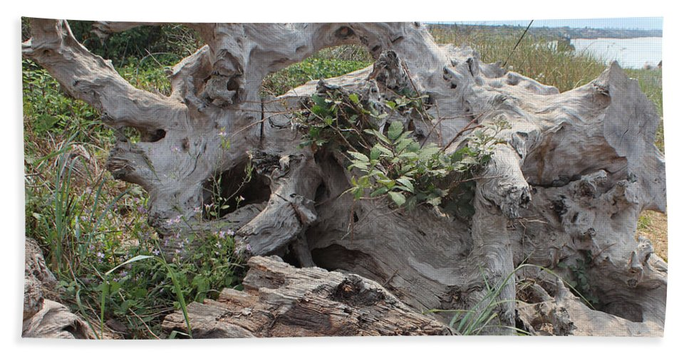 Driftwood Bath Sheet featuring the photograph Old Stump At Gold Beach Oregon 4 by Lydia Miller