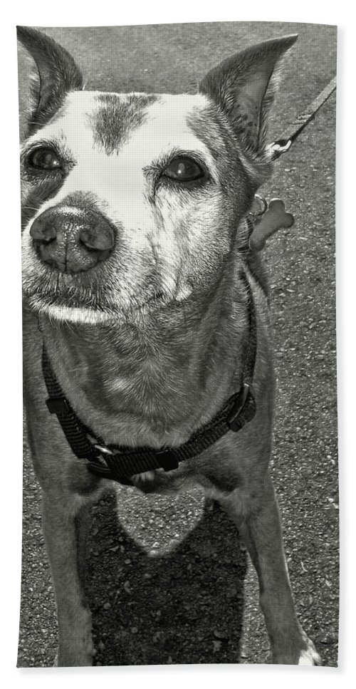 Dog Bath Sheet featuring the photograph Old Timer by JAMART Photography
