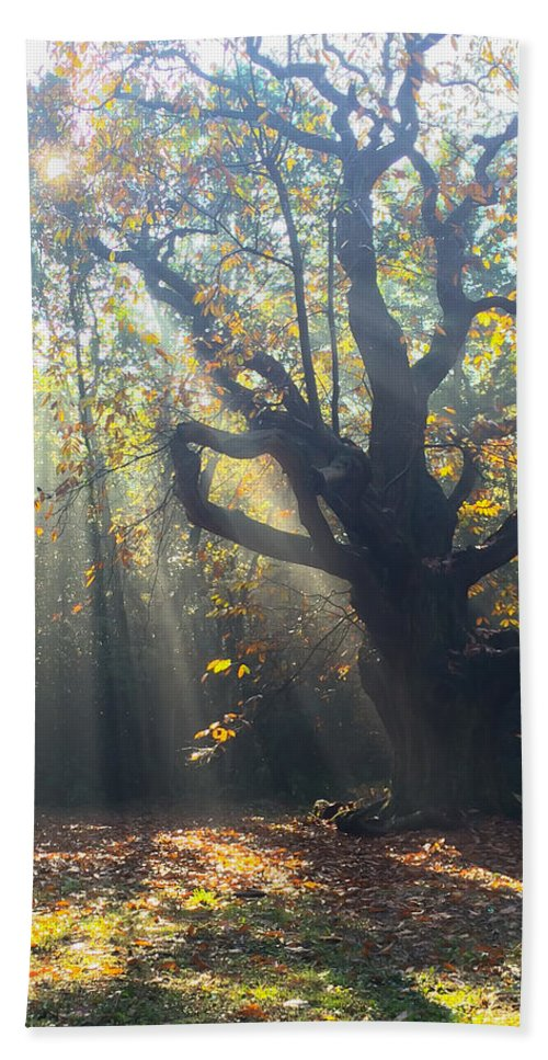 Autumn Bath Sheet featuring the photograph Old Tree And Sunbeams by Mo Barton