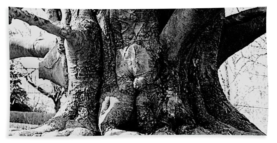 Tree Hand Towel featuring the photograph Old Tree Ground Up by Jean Macaluso