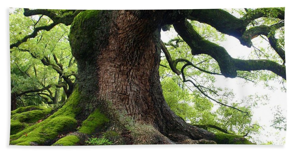 Tree Hand Towel featuring the photograph Old Tree In Kyoto by Carol Groenen