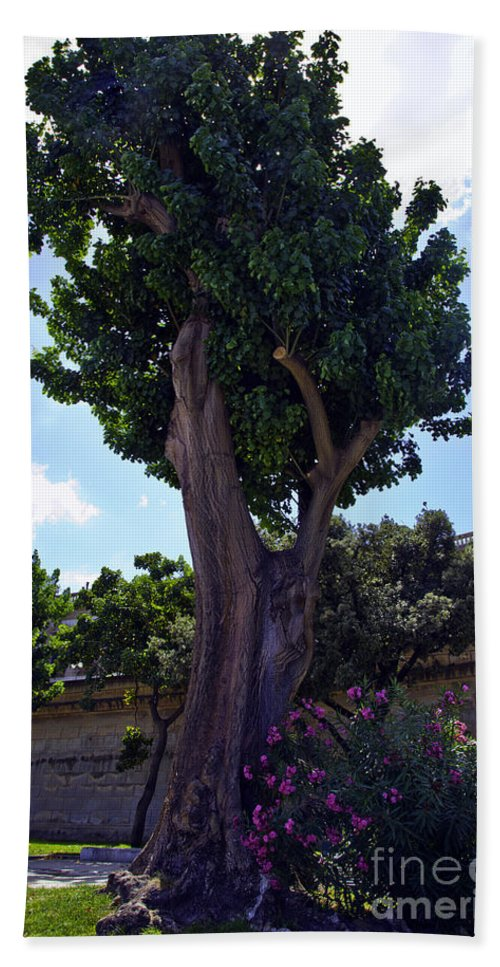Tree Hand Towel featuring the photograph Old Tree In Palermo by Madeline Ellis