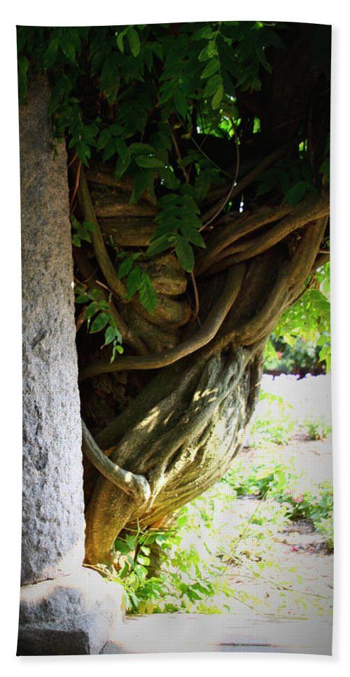 Wisteria Hand Towel featuring the photograph Old Wisteria by Tina Meador