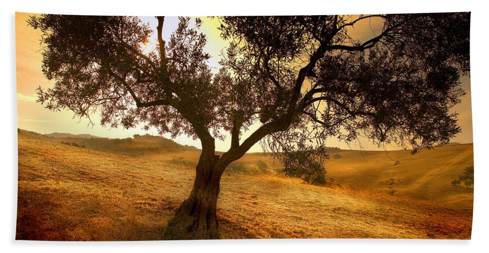 Landscape Bath Towel featuring the photograph Olive Tree Dawn by Mal Bray