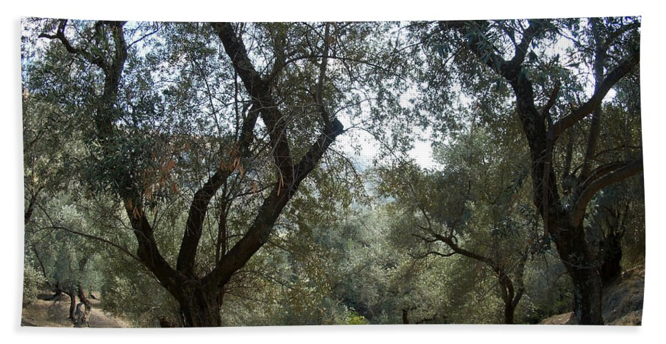 Crete Hand Towel featuring the photograph Olive Trees by Jouko Lehto