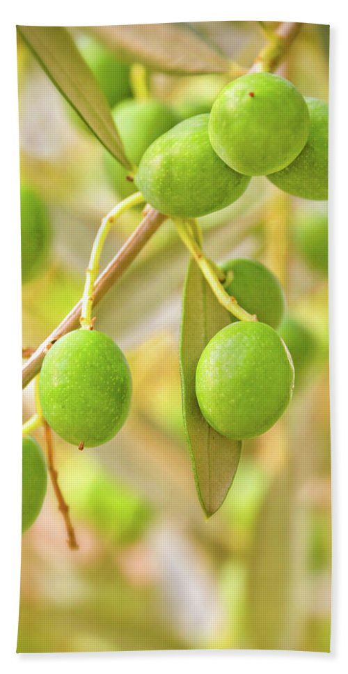 Olive Tree Hand Towel featuring the photograph Olives by Delphimages Photo Creations