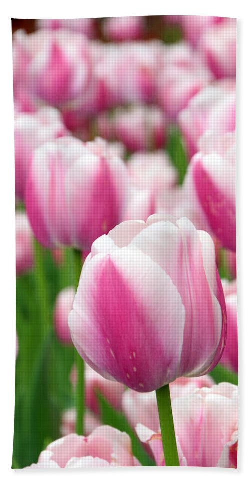 Tulip Bath Sheet featuring the photograph Ollioules by Carolyn Stagger Cokley