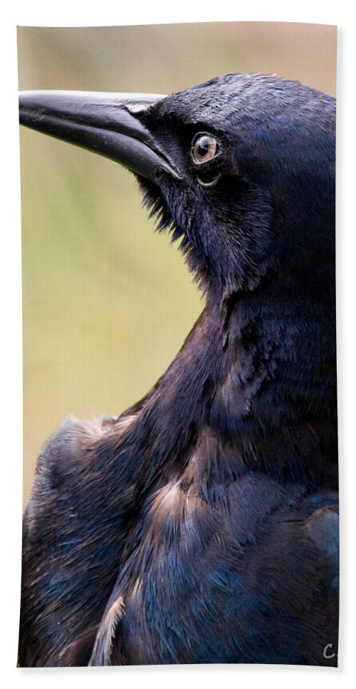 Bird Bath Towel featuring the photograph On Alert by Christopher Holmes