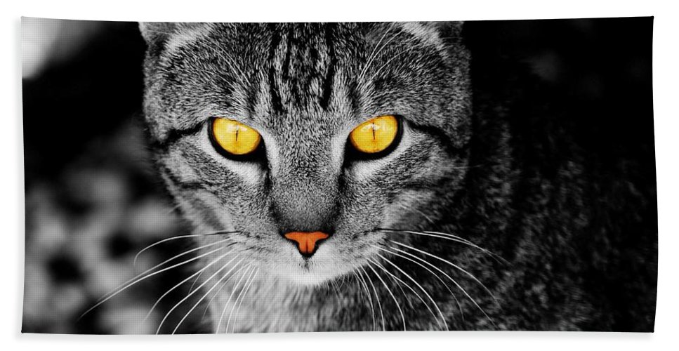 Cat Hand Towel featuring the photograph On Cat Watch by Angie Tirado
