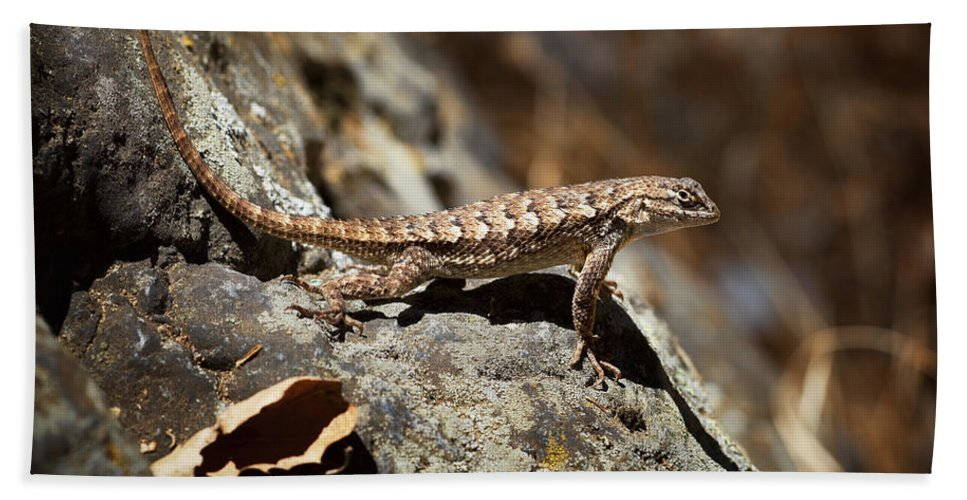 Western Fence Lizard Bath Sheet featuring the photograph On The Look Out by Kelley King