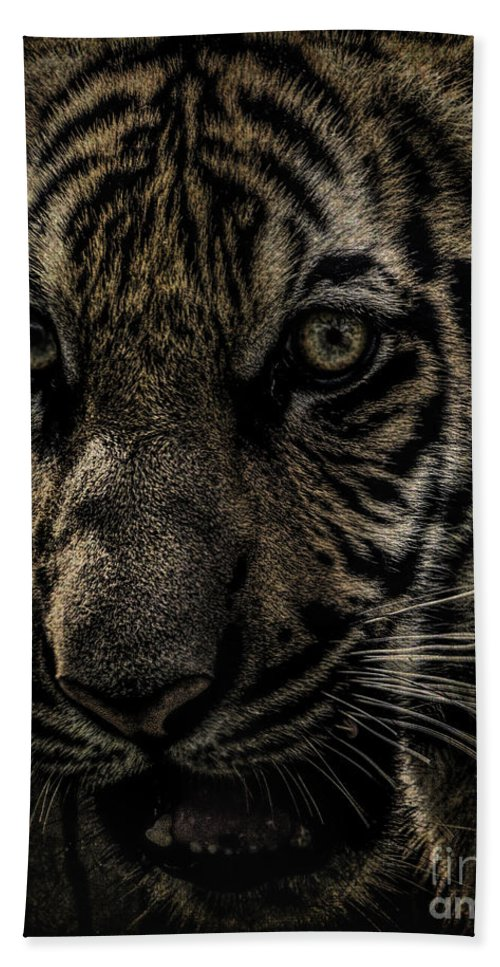Big Cats Hand Towel featuring the photograph On The Prowl by Ken Frischkorn