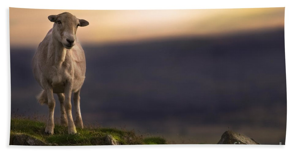 Sheep Bath Towel featuring the photograph On The Top Of The Hill by Angel Ciesniarska