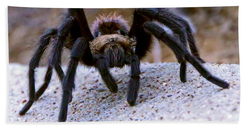 Texas Hand Towel featuring the photograph One Big Hairy Spider by Rebecca Morgan