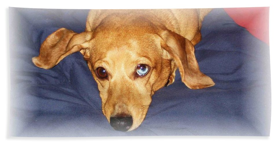 Dachshund Bath Towel featuring the photograph One Blue Eye by Nelson Strong