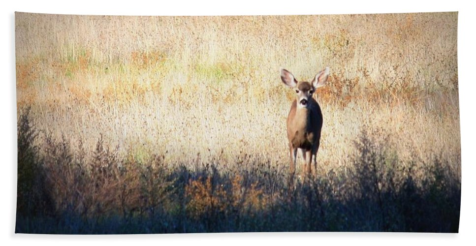 Wildlife Hand Towel featuring the photograph One Cute Deer by Carol Groenen