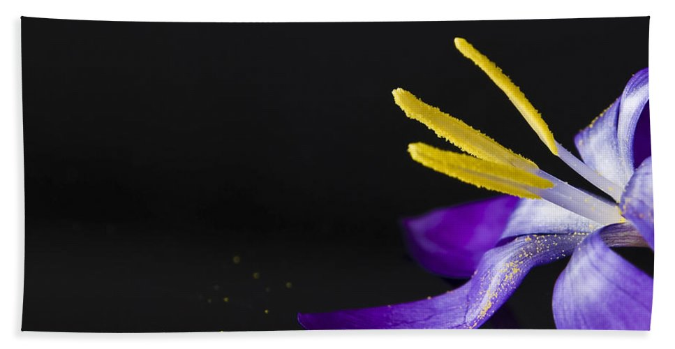 Crocus Hand Towel featuring the photograph One Flower by Svetlana Sewell