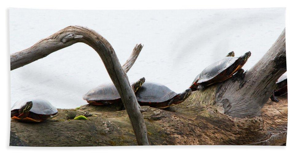 Seney Wetland Bath Sheet featuring the photograph One Hiding Turtle by Linda Kerkau